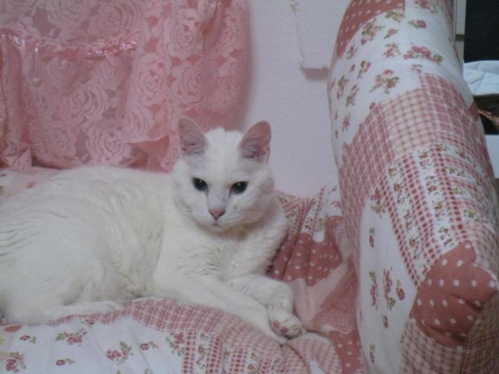 猫ピカイアの猫
